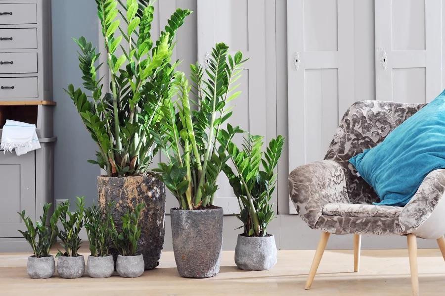 planta ideal para cada signo